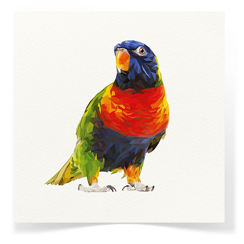 Lorikeet Greeting Cards 3pack