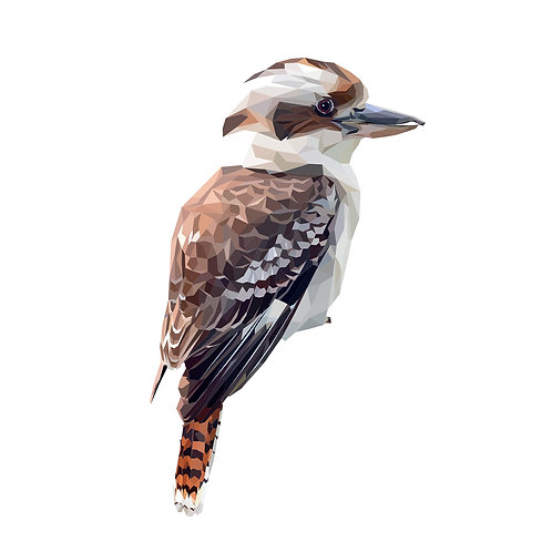 Kookaburra Digital Download