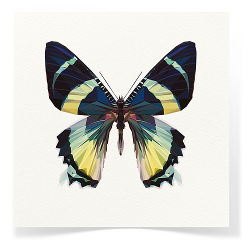 Butterfly Greeting Cards 3pack