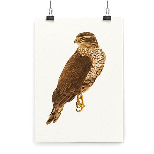 Falcon Wall Art Print