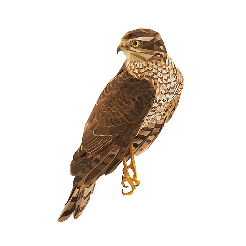 Falcon Digital Download