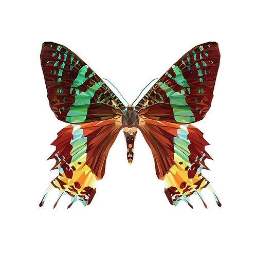 Butterfly 2 Digital Download