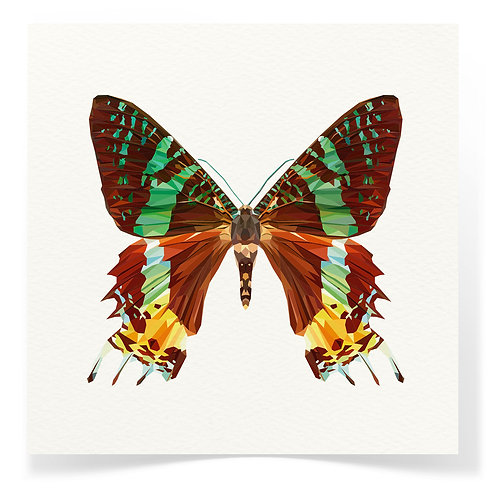 Butterfly 2 Greeting Cards 3pack