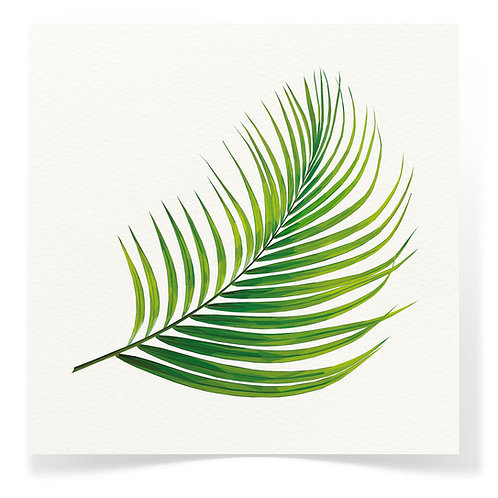 Palm Leaf Greeting Cards 3pack