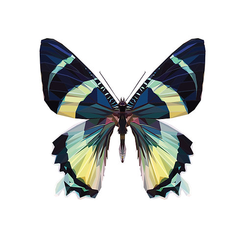 Butterfly Digital Download
