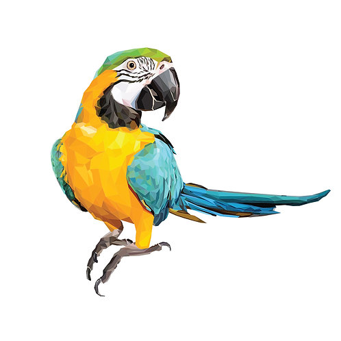 Macaw Parrot Digital Download