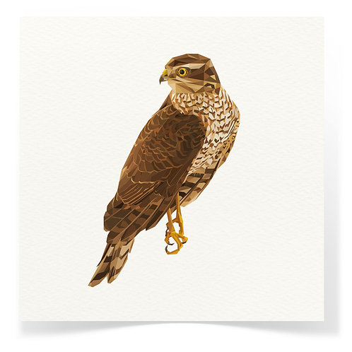Falcon Greeting Cards 3pack