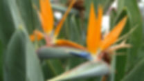 flower-3651376.jpg