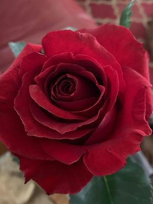 perfect rose.jpg