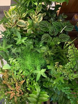 plants mixed.jpg