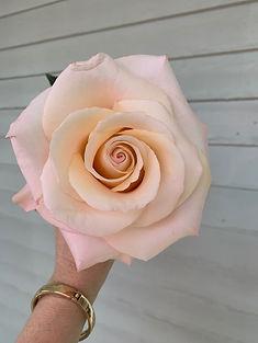 perfect rosalyn rose.jpg