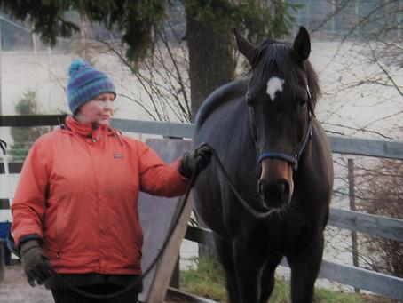 Joululahja hevoselle