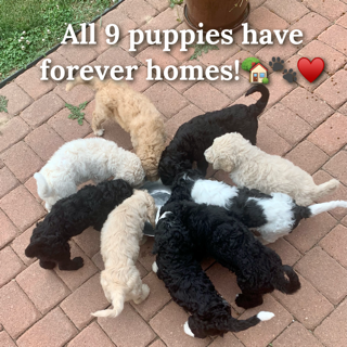 Forever homes found!
