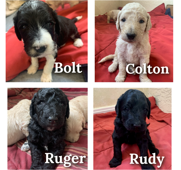 All 9 puppies have found forever homes