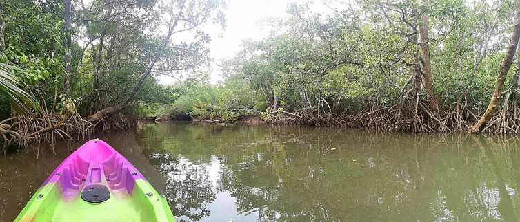 Kingfisher Park Mangrove Kayaking