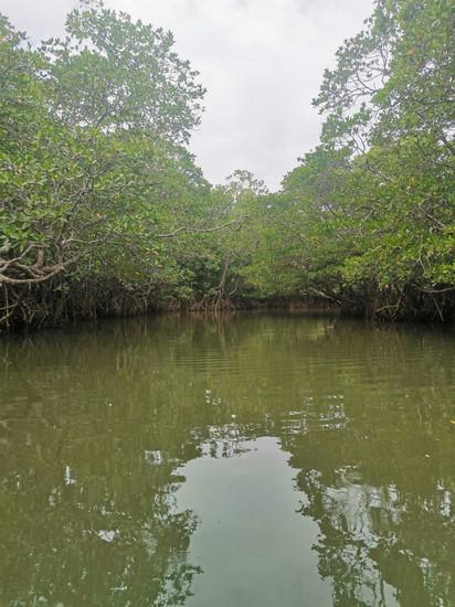 Kingfisher Park Mangrove Kayaking