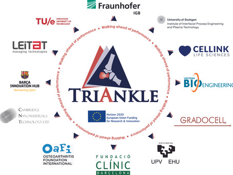 European TRIANKLE project will develop 3D bioprinted personalised scaffolds for tissue regeneration