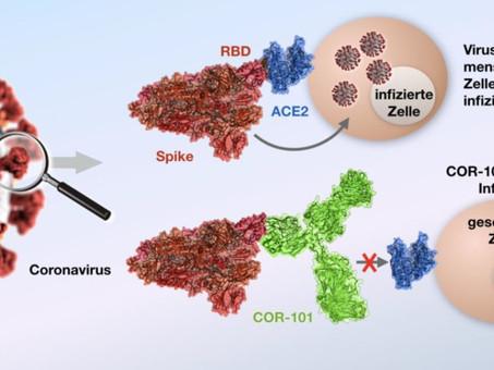 How human antibody COR-101 neutralizes the coronavirus SARS-CoV-2