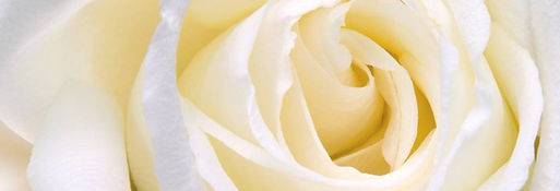 White-Rose-Narrow.jpg