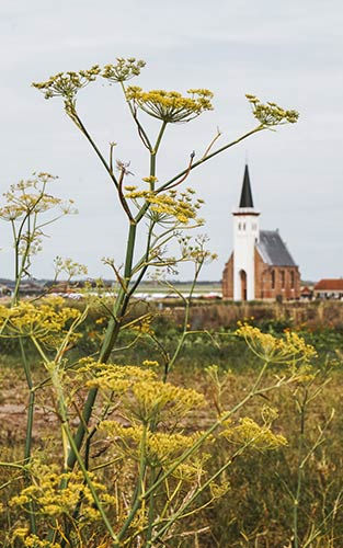 Het fotogenieke witte kerkje in Den Hoorn uit de 13e eeuw