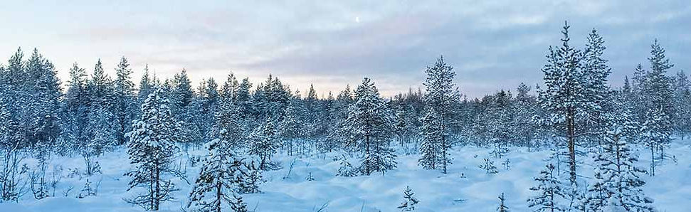 Kaamos: licht in het donkere nacht in Finland