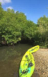 Santa Cruz: de Mangrove van Curacao