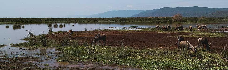 Overnachten tijdens safari in MCF Lodge Tanzania