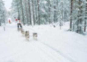 Husky tour in Fins Lapland