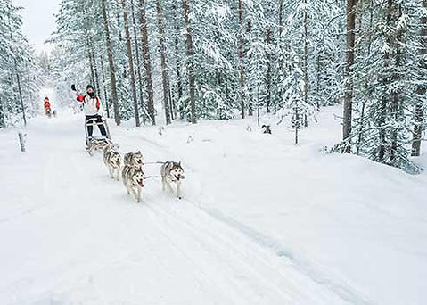 Husky tour in Fins Lapland