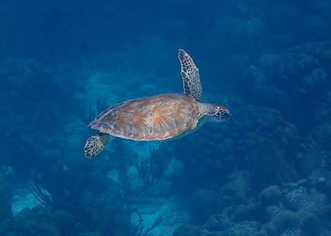 Snorkelen in Bonaire