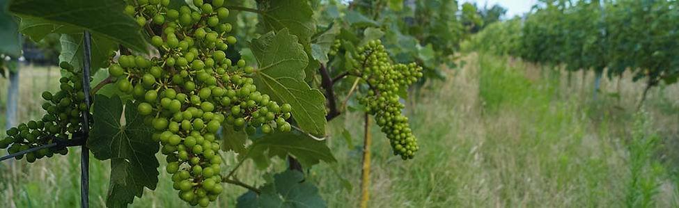 Proef de lekkerste wijnen van Wijngaard De Kroon van Texel