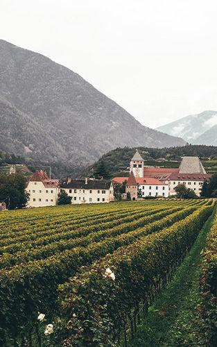 wijnhuis2.jpg