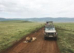 Big Five spotten in Tanzania
