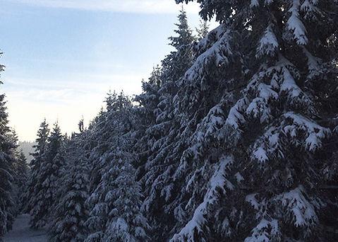 winterberg9-490-x-350.jpg