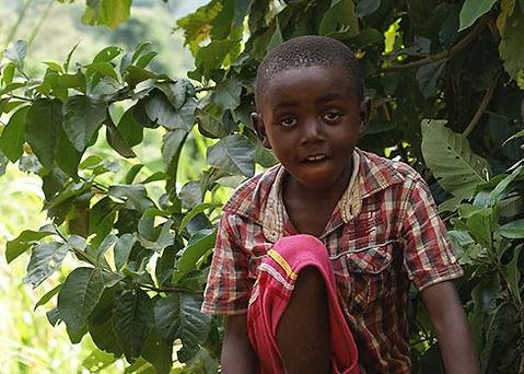 Koffieplantages bezoeken tanzania