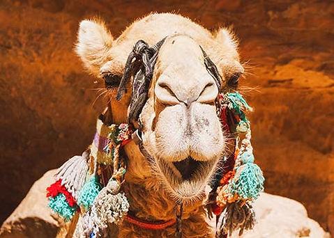 De mooiste hotspots van Jordanië