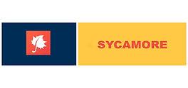 sycamore web.JPG