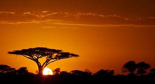 www.davesimpsonsafaris.com, camping, safari, great, fun, private, exclusive, Serengeti, tree, sunrise, Tanzania.