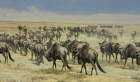 www.davesimpsonsafaris.com, Tanzania, safari, adventure, fun, wildebeest, grass, space, vast, Ngorongoro