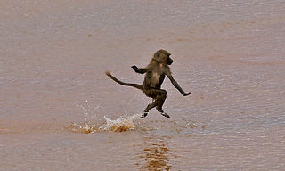 www.davesimpsonsafaris.com, Kenya, camping, safari, great, fun, private, exclusive, baboon, Samburu, ballet, river.