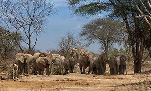 Tsavo, Kenya, Ithumba, wild, elephants, orphans, tame, respect, water, www.davesimpsonsafaris.com