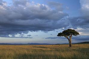 www.davesimpsonsafaris.com, tree, Maasai Mara, Kenya, plain, open, grass, grassland, safari, camping