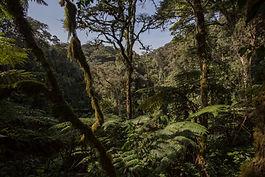 www.davesimpsonsafaris.com, Uganda, safari, adventure, Bwindi, forest,