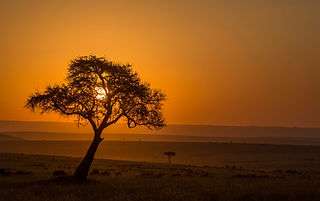 www.davesimpsonsafaris.com, Kenya, camping, safari, great, fun, private, exclusive, sunset, Maasi Mara, wildebeest, migration
