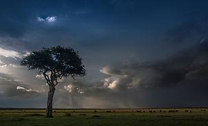 www.davesimpsonsafaris.com, Kenya, tree, camping, safari