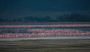 www.davesimpsonsafaris.com, Tanzania, safari, adventure, fun, flamingos, Ngorongoro, crater
