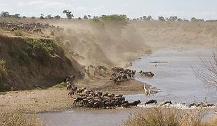 www.davesimpsonsafaris.com, crossing, Mara, Kenya, safari, camping