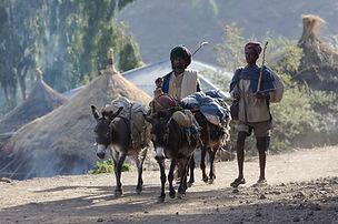 Lalibela, Ethiopia, www.davesimpsonsafaris.com, market, donkey, safari