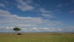 Elepha Kenya, green, grass, short, Maasai, www.davesimpsonsafaris.com
