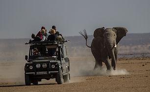 elephant, charge, www.davesimpsonsafaris.com, safari, camping, Amboseli, Kenya